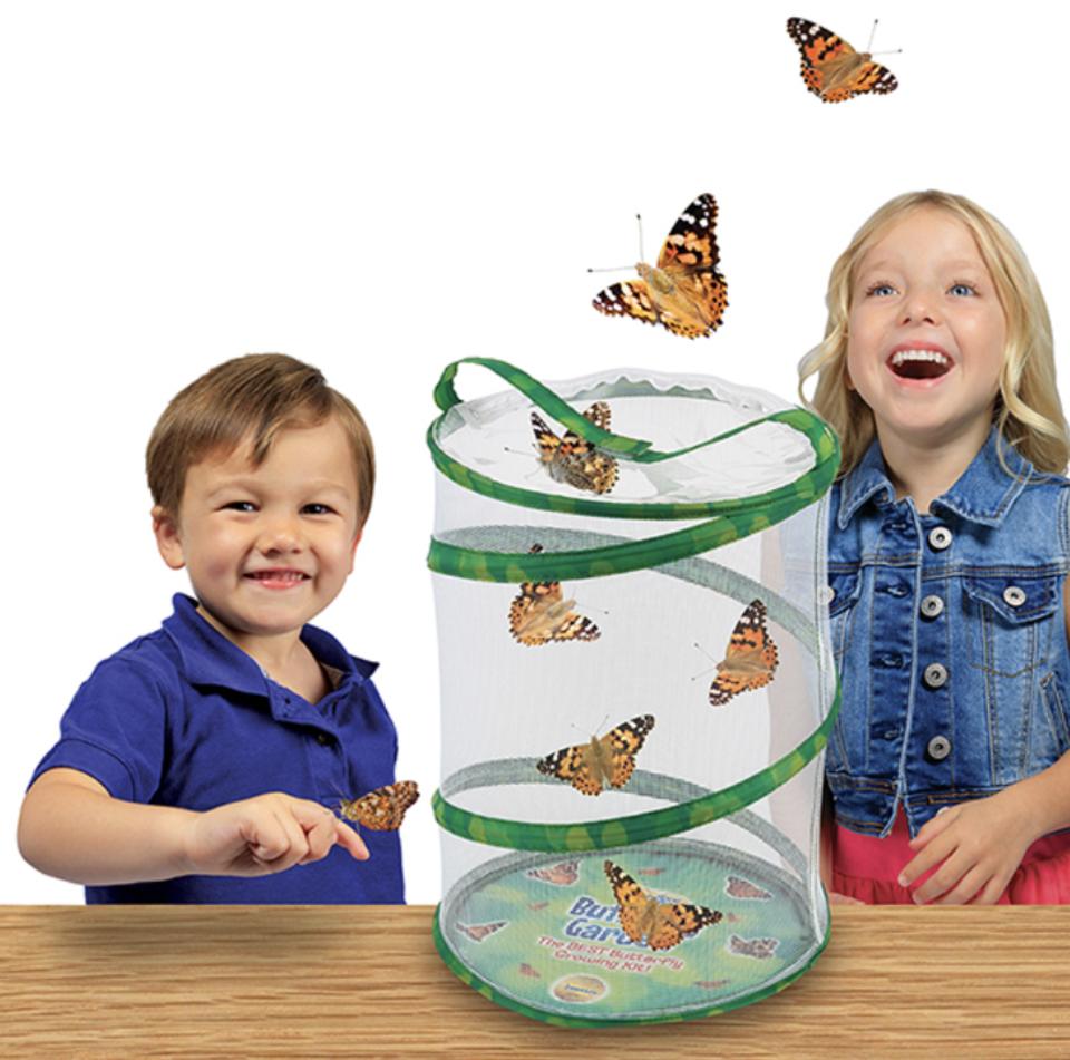 Butterfly garden STEM gift for kids